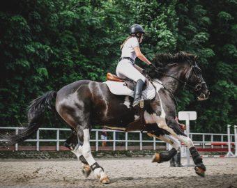 Pferd – Sattel – Reiter Analyse